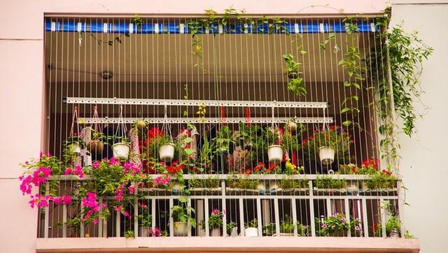 Vườn hoa ban công nhà chị làm sáng cả một góc phố.
