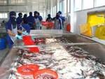 IDI: Giá cá tra giảm mạnh cải thiện kết quả kinh doanh quý 4