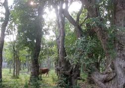 Vườn cây cảnh trăm tỷ của ông trưởng thôn