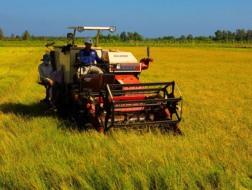 Thị trường máy nông nghiệp VN: Máy ngoại thống lĩnh máy nội