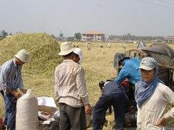 """Tạm trữ lúa gạo liệu có """"cứu được giá"""" cho nông dân?"""