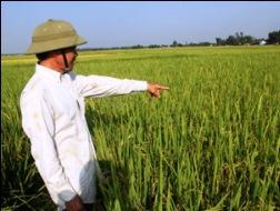 """Bộ trưởng Cao Đức Phát: """"Người trồng lúa không lãi được 30%"""""""