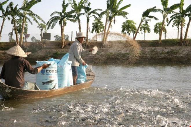 Cần quản lý chặt hơn quy trình nuôi cá tra, cá ba sa