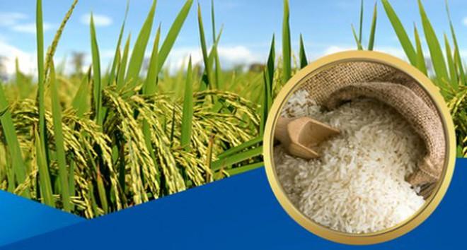 Việt Nam bất ngờ giảm mạnh xuất khẩu gạo