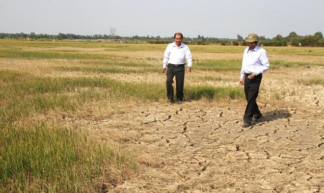 Thêm 90.000 ha lúa có thể bị chết vì hạn, mặn