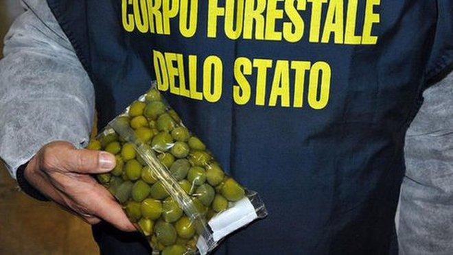 Châu Âu bắt giữ 10.000 tấn thực phẩm cấm