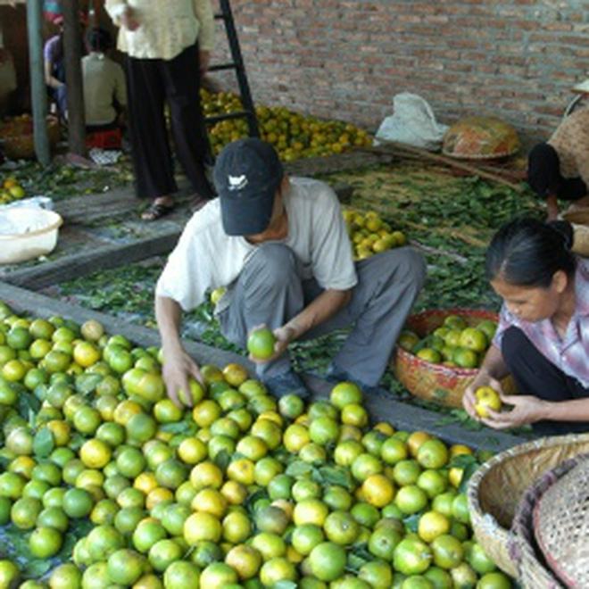 Chợ đầu mối nông sản Hà Nội: Chưa mang lại hiệu quả!