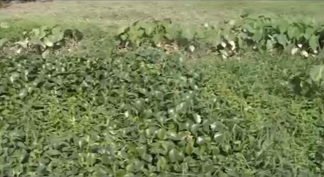 Hải Phòng: Loay hoay tìm cách xóa đất nông nghiệp bỏ hoang