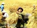Vào AEC, Việt Nam vẫn có thế mạnh với nông nghiệp