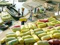 17 ngân hàng cho vay thu mua tạm trữ thóc, gạo