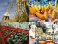 Quý 1, xuất khẩu nông sản giảm 13,2%
