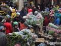Hoa ly gập chợ vẫn đắt như tôm tươi