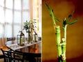 Trồng 10 loại cây này trong phòng khách, bạn sẽ nhanh chóng phát tài