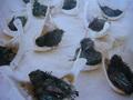 Hàng nghìn con chim yến nuôi chết vì nhiễm virus cúm H5N1