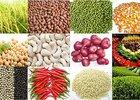 Xuất khẩu nông, lâm, thuỷ sản vượt ngưỡng 28 tỷ USD