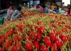EU tăng kiểm soát đặc biệt với trái thanh long của Việt Nam