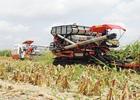 Nghịch lý xuất nhập nông sản