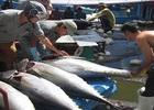 Tổng sản lượng thủy sản 9 tháng đạt gần 5 triệu tấn