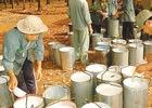Giá xuất khẩu cao su giảm hơn 24%