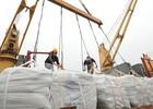 Việt Nam xuất siêu sang CHLB Đức gần 1,7 tỷ USD trong 8 tháng