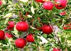 Tái cơ cấu đầu tư công: Quả chưa ngọt nhưng đã có trái chín?