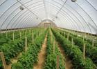 Đến 2020, xây dựng 11 khu nông nghiệp ứng dụng công nghệ cao
