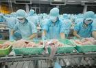 EU, Hàn Quốc cảnh báo cá tra