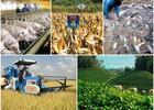 Động lực nào để nông nghiệp tăng trưởng?