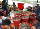 Mạnh tay quản lý thuốc, hóa chất nuôi trồng thủy sản