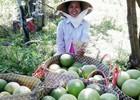 Trái cây miền Tây khan hiếm, giá tăng chóng mặt