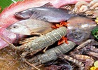Red River Holding & Quỹ Đầu tư Việt Nam thắng lớn từ cổ phiếu thủy sản