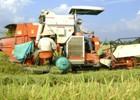 Phát triển tam nông: Cần xem trọng thế nào?