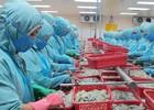 Vấn đề tôm Việt Nam bị áp thuế chống bán phá giá