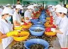Tiềm năng lớn xuất khẩu tôm sang Australia