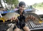 Người dân miền Tây 'đua' nuôi cá không cần cho ăn