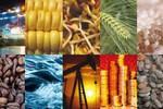WB hạ dự báo giá năng lượng và các hàng hóa chủ chốt