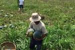 Xuất khẩu nông sản: Cứ Trung Quốc mua gì, nông dân lại ào ào đi trồng…