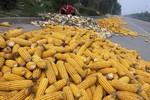 El Nino sẽ ảnh hưởng tới nhiều loại cây trồng ở châu Á và Nam Mỹ