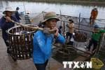 Brazil dỡ bỏ lệnh tạm đình chỉ nhập khẩu cá tra Việt Nam