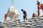 Xuất khẩu gạo phẩm cấp thấp: Cảnh báo 'sập bẫy' Trung Quốc