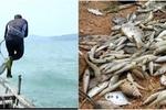 Sau tôm cá, đến lượt thợ lặn ở Vũng Áng tử vong