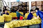 Giá cao su xuất khẩu có thể chỉ còn 20 triệu đồng/tấn