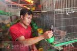Chàng trai Hà Nội bỏ học nuôi chim bồ câu thu tiền tỉ mỗi năm