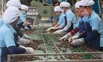 Việt Nam cần bao nhiêu doanh nghiệp để hội nhập?
