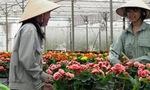 Báo Nhật: Không lâu nữa, Việt Nam sẽ trở thành trung tâm sản xuất hoa ở Châu Á