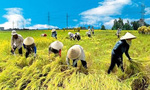 """""""Chơi sòng phẳng"""" với DN: Nông dân cũng phải chuyên nghiệp"""