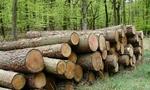 [Hàng hóa nổi bật ngày 03/3]: Cấm xuất khẩu một số sản phẩm nông, lâm nghiệp
