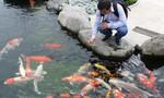 TP.HCM: Xuất khẩu cá cảnh tăng trưởng mạnh