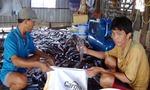 An Giang: Hơn 655 tấn cá nuôi lồng bè bị chết