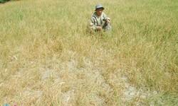 Hạn hán, nhiễm mặn đe dọa ĐBSCL